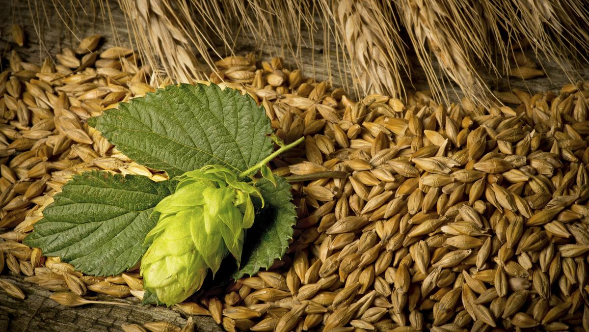 hops-and-barley-beer1200xx3589-2022-0-453